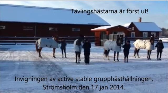 Eröffnungsfeier Januar 2014